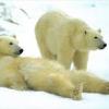 Ripuliamo il Polo Nord, crociera scontata alle Svalbard.