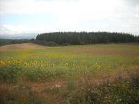 SPAGNA, Paesaggio lungo il cammino