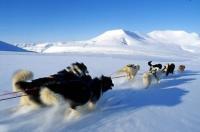 GROENLANDIA, inseguendo l'husky sul ghiaccio