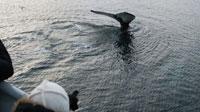 SVALBARD, Balena