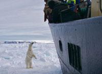 SVALBARD, Orso polare dalla nave