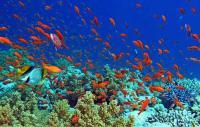 GIORDANIA, Mar rosso, aqaba