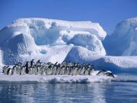 ARGENTINA, Polo Sud, pinguini3