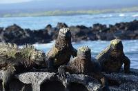 PERU, Galapagos, flora e fauna