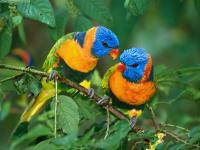 PERU, Fauna amazzonica