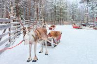 NORDEUROPA, ROVANIEMI, FINLANDIA