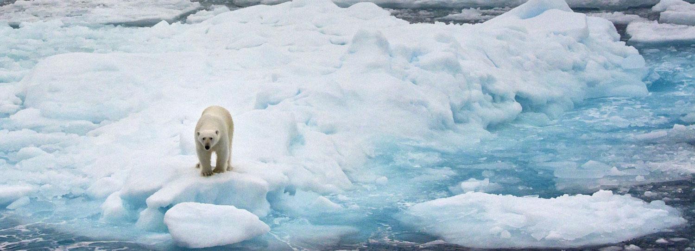 Viaggio in Svalbard: Crociere Artiche 2022 - Ocean Wide Expedition