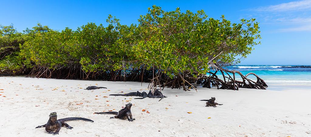 Viaggio in Ecuador e Galapagos: Ecuador & Crociere Alle Galapagos