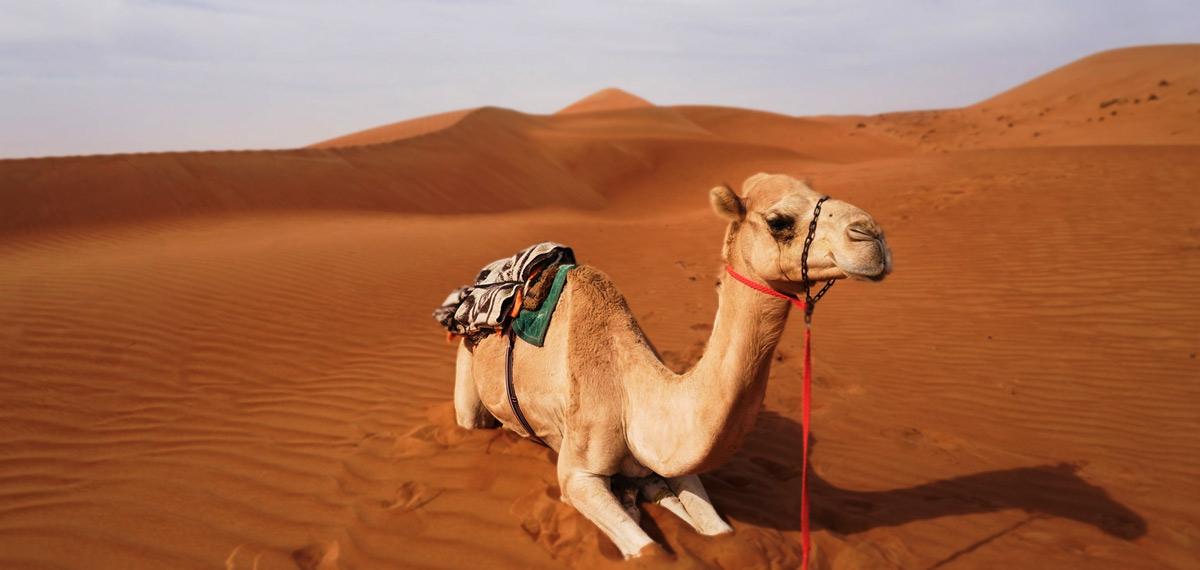 Viaggio in Oman e Emirati: Oman Tour Di Gruppo  (con Musandam, Mare E Dubai)