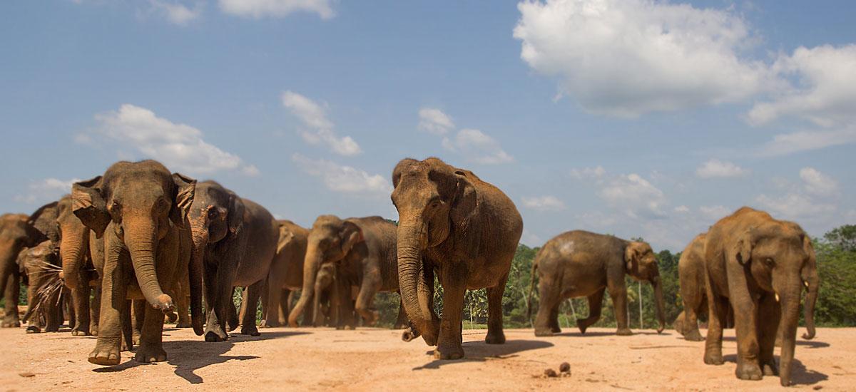 Viaggio in Sri Lanka: Sri Lanka: Viaggi A Partenza Garantita (in Italiano) 2021